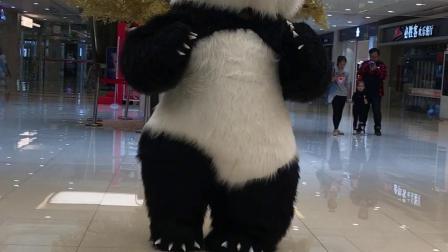 大熊猫 北极熊