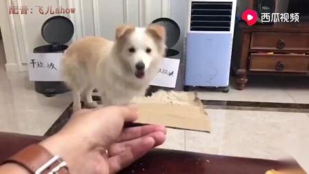 搞笑动物配音自从垃圾分类后,我终于明白养狗的好处了