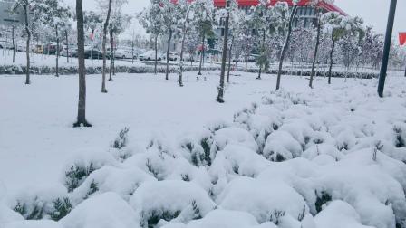 兰州下雪了,白雪飘飘仿佛童话世界