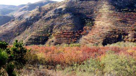 赤峰市敖汉旗的小山秋色