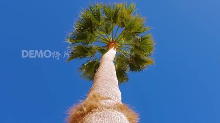 公司晚会 超清视频素材 c977 唯美小清新粽叶树庞大树木绿色植被神奇大自然实拍视频 舞台视频 大屏幕