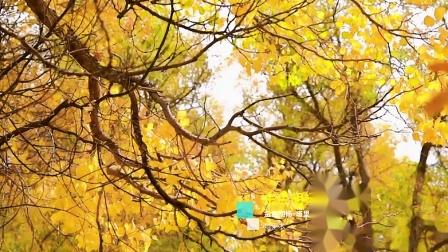 金色胡杨-塔里木