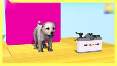 益智早教!小动物找纪念照片!有趣的儿童卡通礼物!