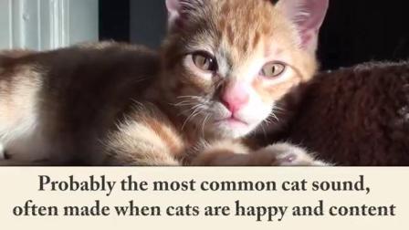 猫的语言解析