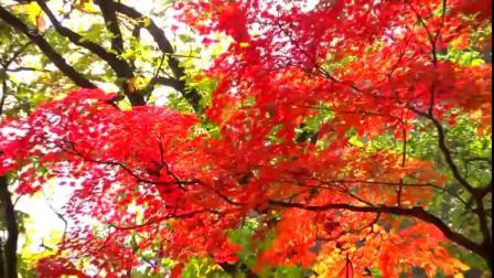 평양의 가을