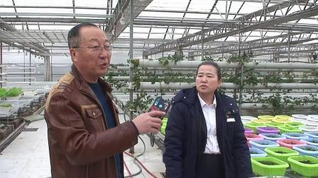 中润绿化公司到农科院基地考察基质栽培技术