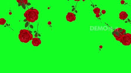 超清视频素材 E121 唯美玫瑰花花枝花朵鲜花月季花下落动画婚礼婚庆歌舞表演绿屏抠像LED视频后期制作合成素材 晚会视频背景