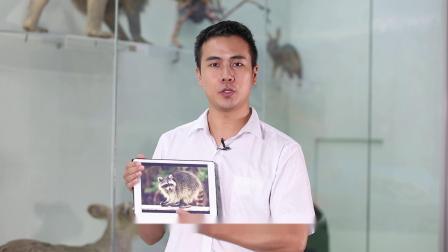 奇妙的博物馆故事系列二:小熊猫和小浣熊