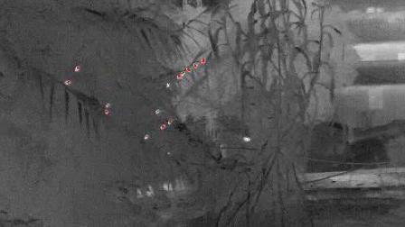 高德热成像观察找东西吃的麻雀