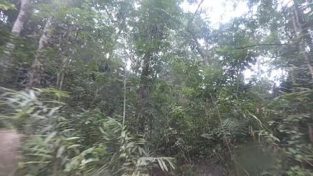 2019年西双版纳雨林挑战赛SS3