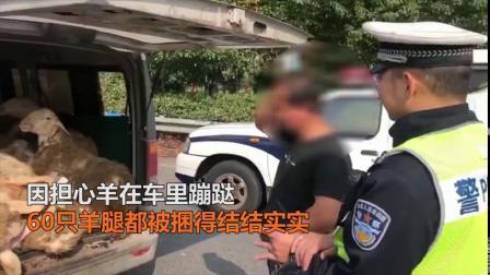 小面包车塞了2个人15只羊,羊的表情亮了 via@豫直播