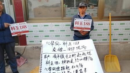 高唐县-清平镇-仓上村-农户-科玉188-卖粮-测产-现场