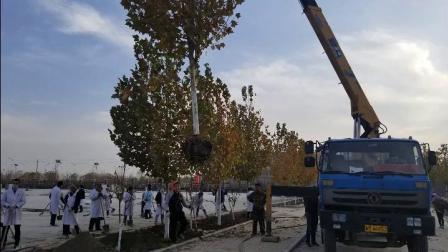 新疆铁门关市医院冬季植树绿化忙