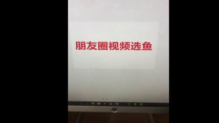 锦鲤土炮与纯区别,20公分昭和锦鲤图片