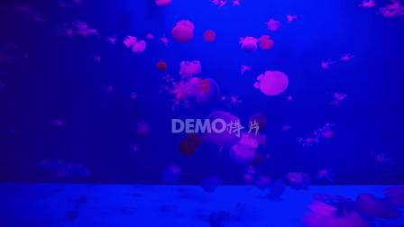 元旦晚会视频 歌曲配乐视频 s908 2k画质超唯美水母海洋生物童话世界卡通视频素材 动感视频 跳舞