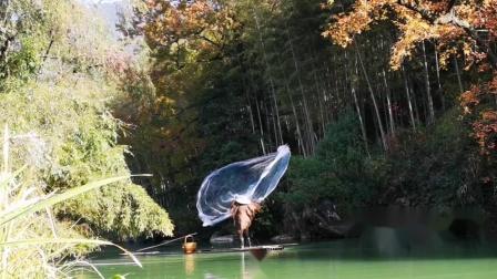 哥网的不是鱼,是人们对乡野朴实生活的向往!