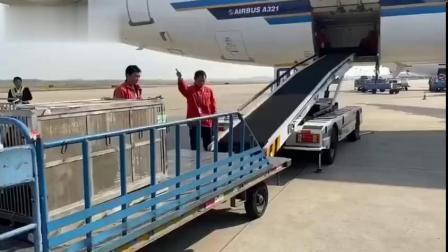 """【再见!大熊猫""""君君""""、""""真真""""从长沙返乡】11月21日14:54,随着南航CZ3461航班从长沙黄花国际机场腾空而起,大熊猫""""君君""""、""""真..."""