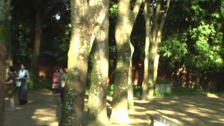 云南西双版纳景洪市热带花卉园(26)