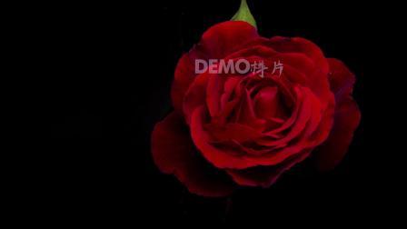 配乐视频 毕业晚会 舞台视频 v296 2k画质超唯美浪漫温馨红色玫瑰花瓣花朵盛开鲜花盛开特写婚礼爱情表白求爱动态视频素材 春晚视频 元旦