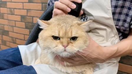 宠物美容师培训,猫洗护师课堂操作,学员猫洗护实操,NGKC指定四星级培训学校
