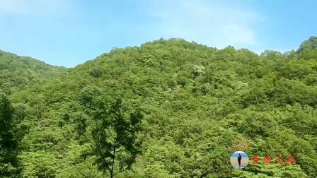 小哥带你去看,最美神农架,这里应该是中国最美的林区97