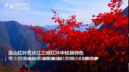 航拍长江三峡红叶 万山红遍层林尽染 via@中新视频