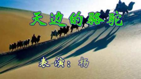 z5杨__天边的骆驼
