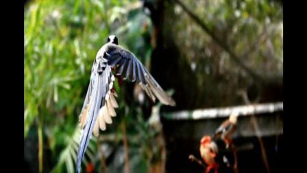 GIF鸟类世界