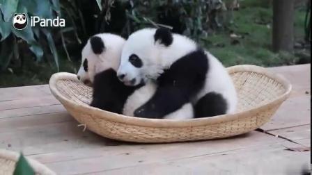 """【又酸了】今天见识到了传说中的""""抱团取暖"""",冬天有熊暖被窝的日子,有种说不出的温暖。网友:这样的暖手宝给我来一对!@环球网"""