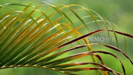 粒子视频 春晚视频背景 歌曲配乐 c980 唯美小清新下雨雨水打在绿色植物叶子上雨滴下落视频实拍素材 学校晚会 幼儿园