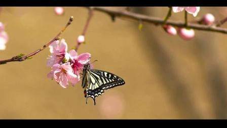 鸿芝 - 酒醉的蝴蝶