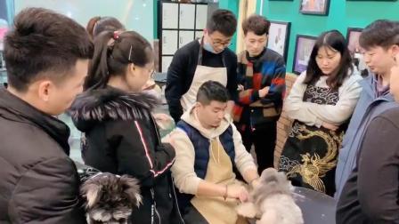 宠物美容培训,贵宾犬泰迪装萌系造型修剪实操演示,山东省唯一一家四星级培训学校