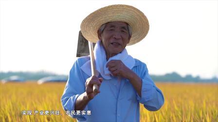 濮院镇新河等三村全域土地综合整治与生态修复纪实
