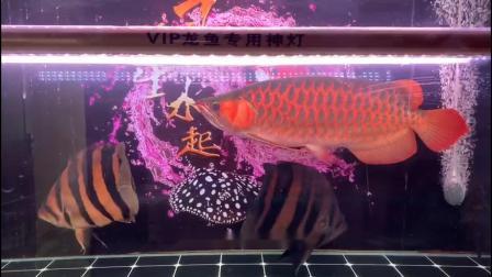 龙鱼专用玉米灯效果反馈及玩家关注的问题解答