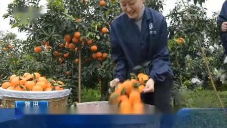 中国晚熟柑橘大数据中心正式揭牌