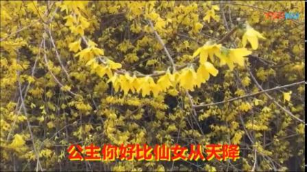 292.双阳公主之鸟语花香  徐荻瑜演唱