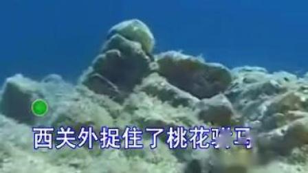 299.西关外捉住了桃花驸马(娱乐版)阿朗_标清