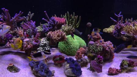 带你360°全方位欣赏大神的绝美海缸