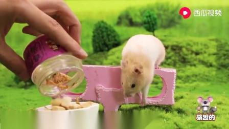小猫小狗:仓鼠给铲屎官科普,为什么有的仓鼠喜欢咬人,如果被咬了怎么办?