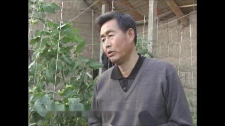 温室种宝--番茄栽培(张仲保)11