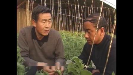 温室种宝--番茄栽培(张仲保)12