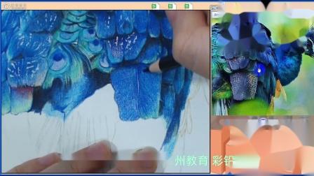 新手彩铅手绘教程教学:孔雀画法