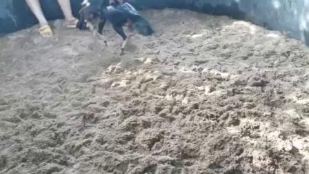 视频二,黑鸡6.6斤,两面管,重腿打脖根,肩胛,头脑。