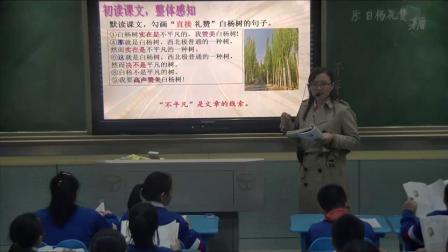 15 白杨礼赞_刘老师特等奖_初中语文人教部编版八年级上学期_F7219