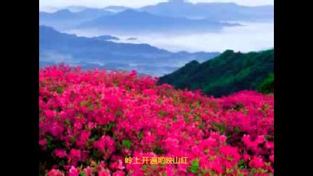 歌曲:映山红-葫芦丝*胡怀钊吹奏