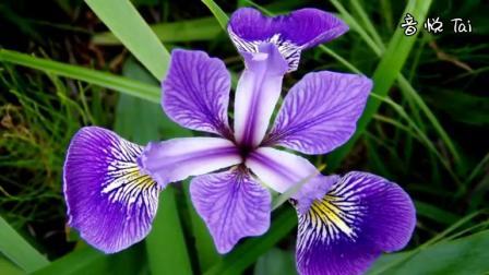 hc - Beautiful purple flowers (美丽的紫花)