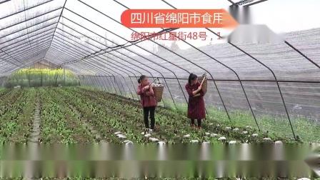 羊肚菌栽培种植培训技术,四川省绵阳市食用菌研究所羊肚菌培训班学员