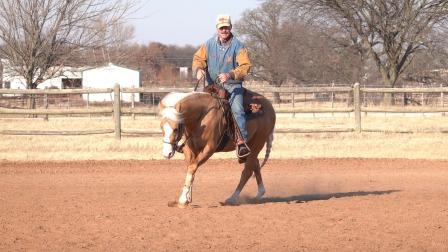 两岁马reining调训日常Training the 2 year old horse