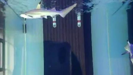 小鲨鱼( •͈ᴗ⁃͈)ᓂ- - -♡