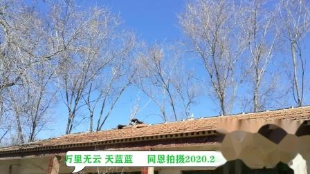 万里无云 天蓝蓝  同恩 拍摄 2020.2.22 202002221547